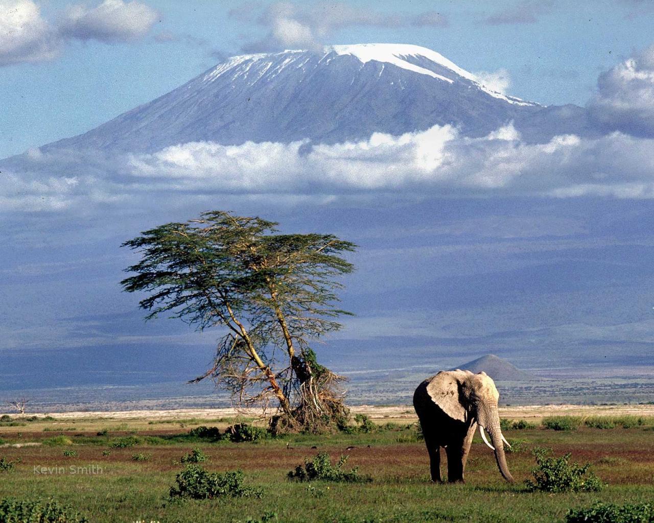 Ascensión Kilimanjaro (5.896 mts)