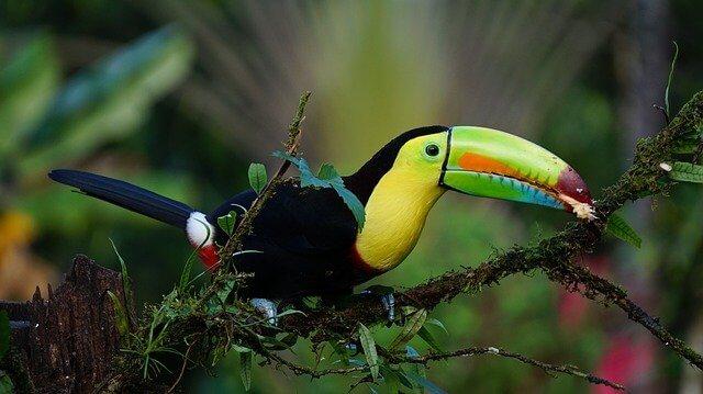 COSTA RICA «DESCUBRE LA PURA VIDA»