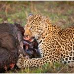 SAFARI FAUNAS Y ETNIAS EN TANZANIA. 31/10 – 7/11