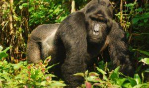 Viaje a Uganda con Himal Mountain